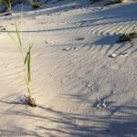 Sandstrand pur