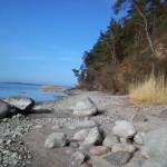 Urwüchsige Uferlandschaft