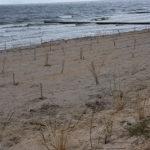 Neue Sanddüne in Zempin